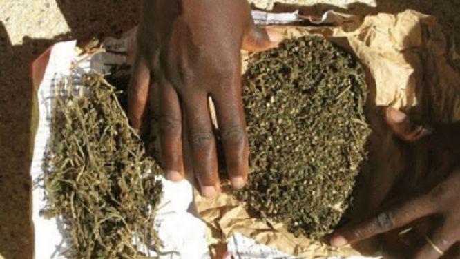 45-sacs-de-cannabis-saisis-a-sabga-dans-la-region-du-nord-ouest