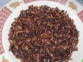 Did you know that Cameroonians like fried termites?