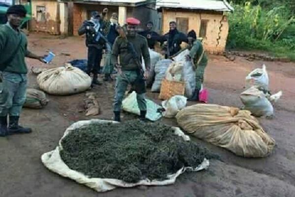 en-trois-mois-la-gendarmerie-a-saisi-410-kg-de-drogue-et-demantele-plusieurs-reseaux-de-distribution