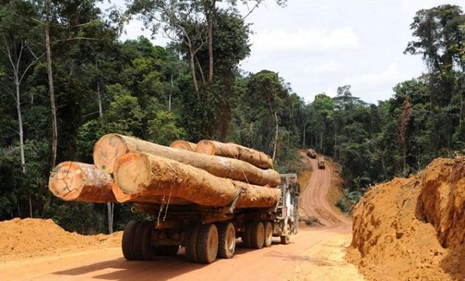 le-cameroun-en-quete-de-13-000-milliards-pour-produire-2-5-millions-de-m3-de-bois-par-an-issu-des-forets-plantees