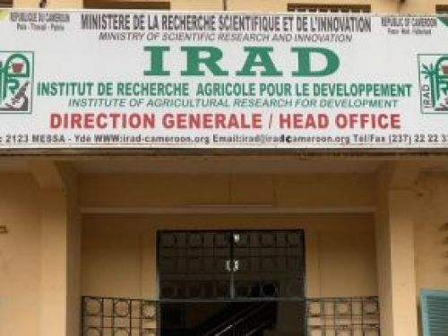 IRAD fires 11 workers for presenting fake credentials