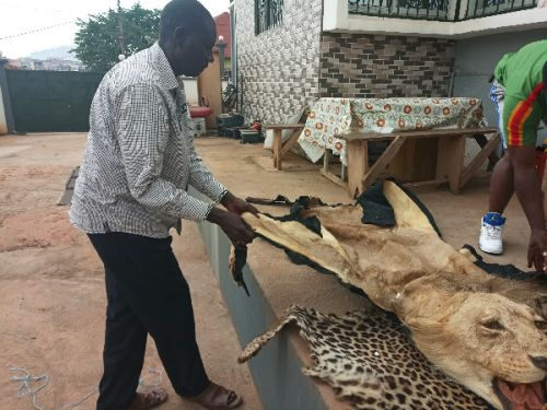 cameroon-and-the-fight-against-protected-wildlife-species-traffickers