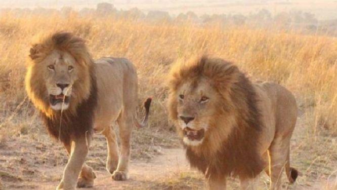 extreme-nord-le-spectre-d-une-nouvelle-attaque-de-lion-plane-sur-makary