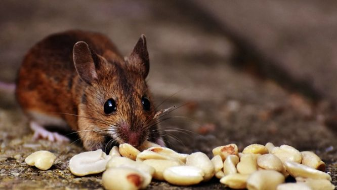 five-children-die-after-mistakenly-consuming-rat-poison