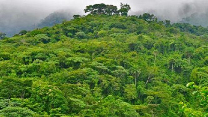 le-cameroun-renonce-a-mettre-en-concession-plus-de-130-000-ha-de-foret-dans-le-littoral