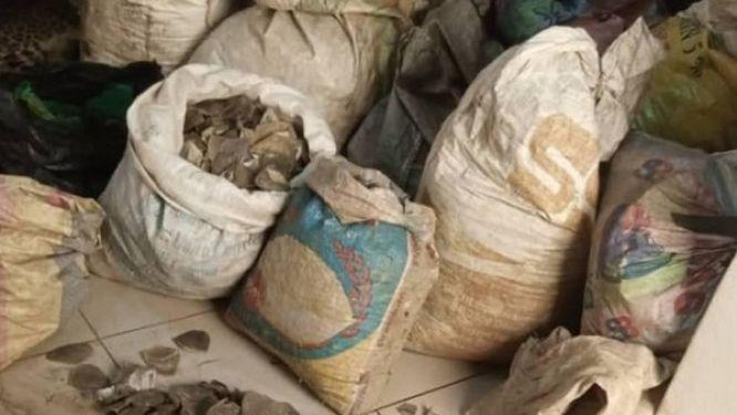 yaounde-un-homme-d-origine-nigeriane-apprehende-avec-331-kg-d-ecailles-de-pangolin-une-espece-protegee