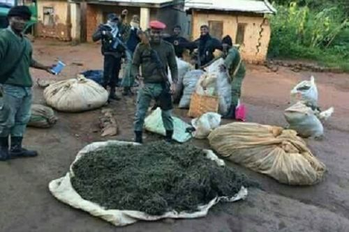 Cameroon's national gendarmerie seized 410kg of drugs in Sep-Nov 2020