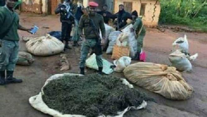 cameroon-s-national-gendarmerie-seized-410kg-of-drugs-in-sep-nov-2020