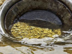 Is there really a gold deposit in Eseka?