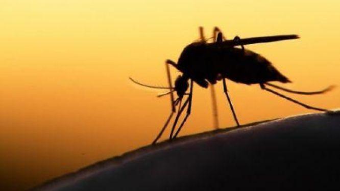 la-couleur-noire-attire-t-elle-particulierement-les-moustiques-video-stopblablacam