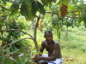 Is it true that young Cameroonians are now interested in the cocoa sector?