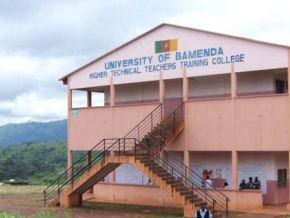 Yes, the 12 young people kidnapped near the University of Bamenda have been released